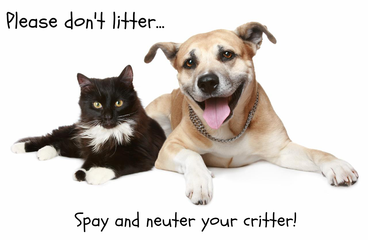8 Benefits to Spaying or Neutering Your Pet - Advanced Veterinary Care